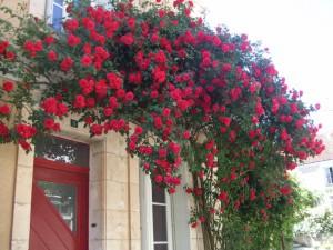 Праздник роз в Шедини