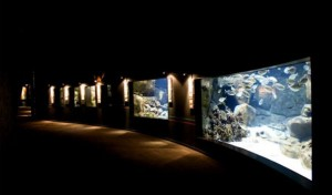 парижский аквариум трокадеро